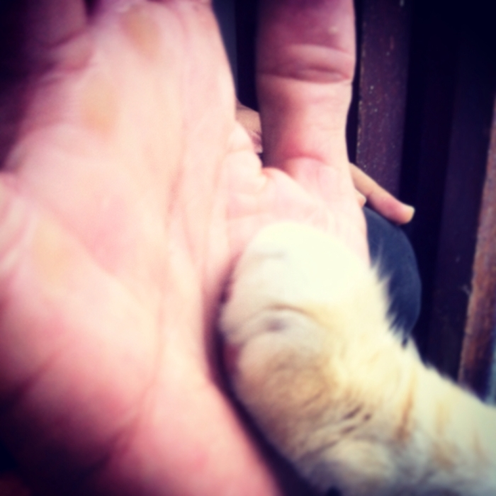 High Five Cat